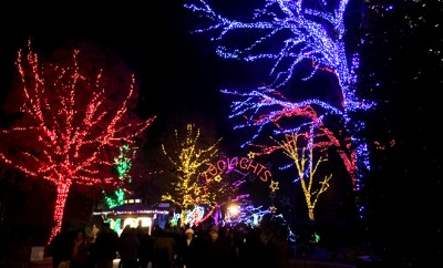 zoo lights dc after five